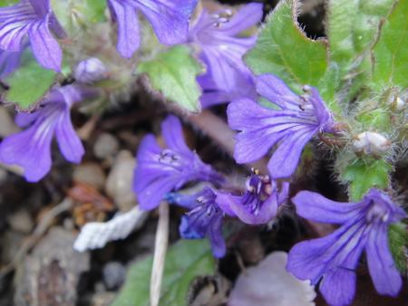 H24年4月度植物調査_c0108460_2124327.jpg