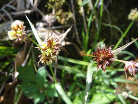 H24年4月度植物調査_c0108460_2132883.jpg