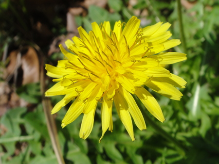 H24年4月度植物調査_c0108460_2143849.jpg