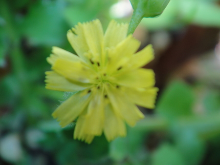 H24年4月度植物調査_c0108460_2154036.jpg