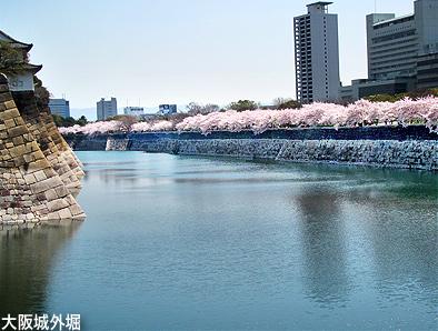 今年の桜は一斉咲き。_c0167961_1631827.jpg