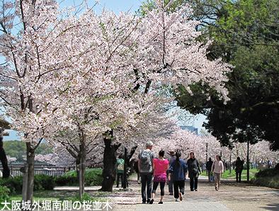 今年の桜は一斉咲き。_c0167961_1633104.jpg