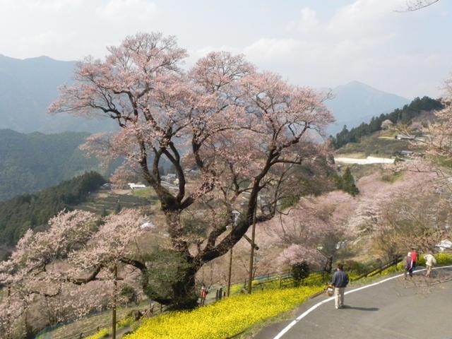 ひょうたん桜_f0227561_0193445.jpg