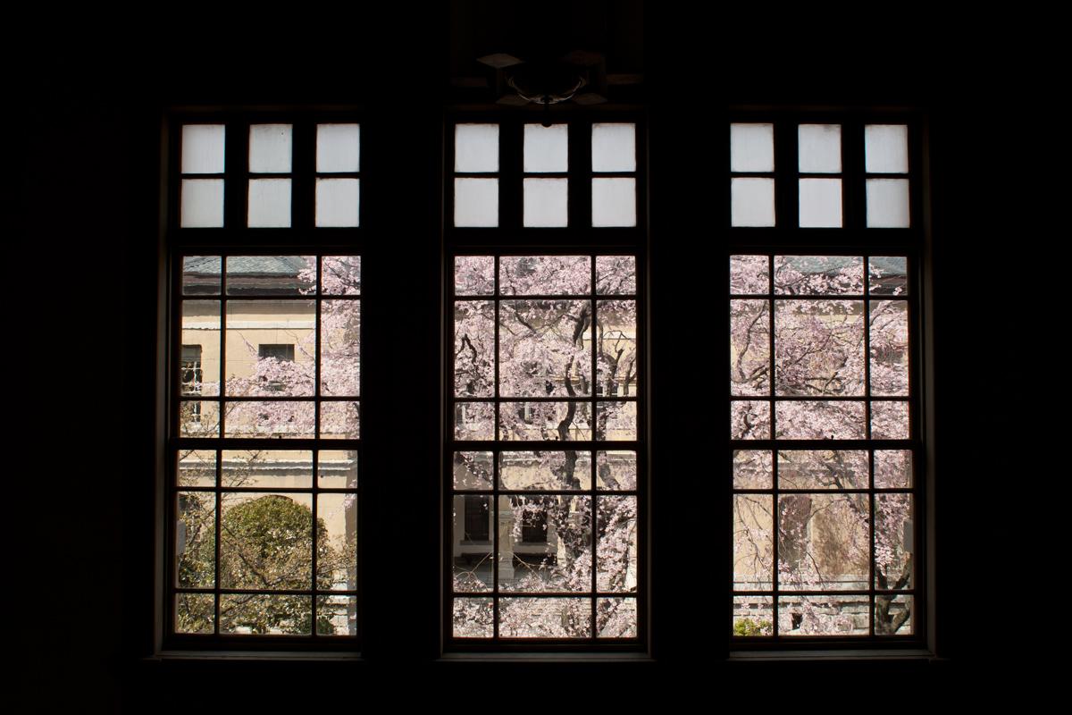 桜 2012 京都 <京都府庁>_f0021869_005266.jpg