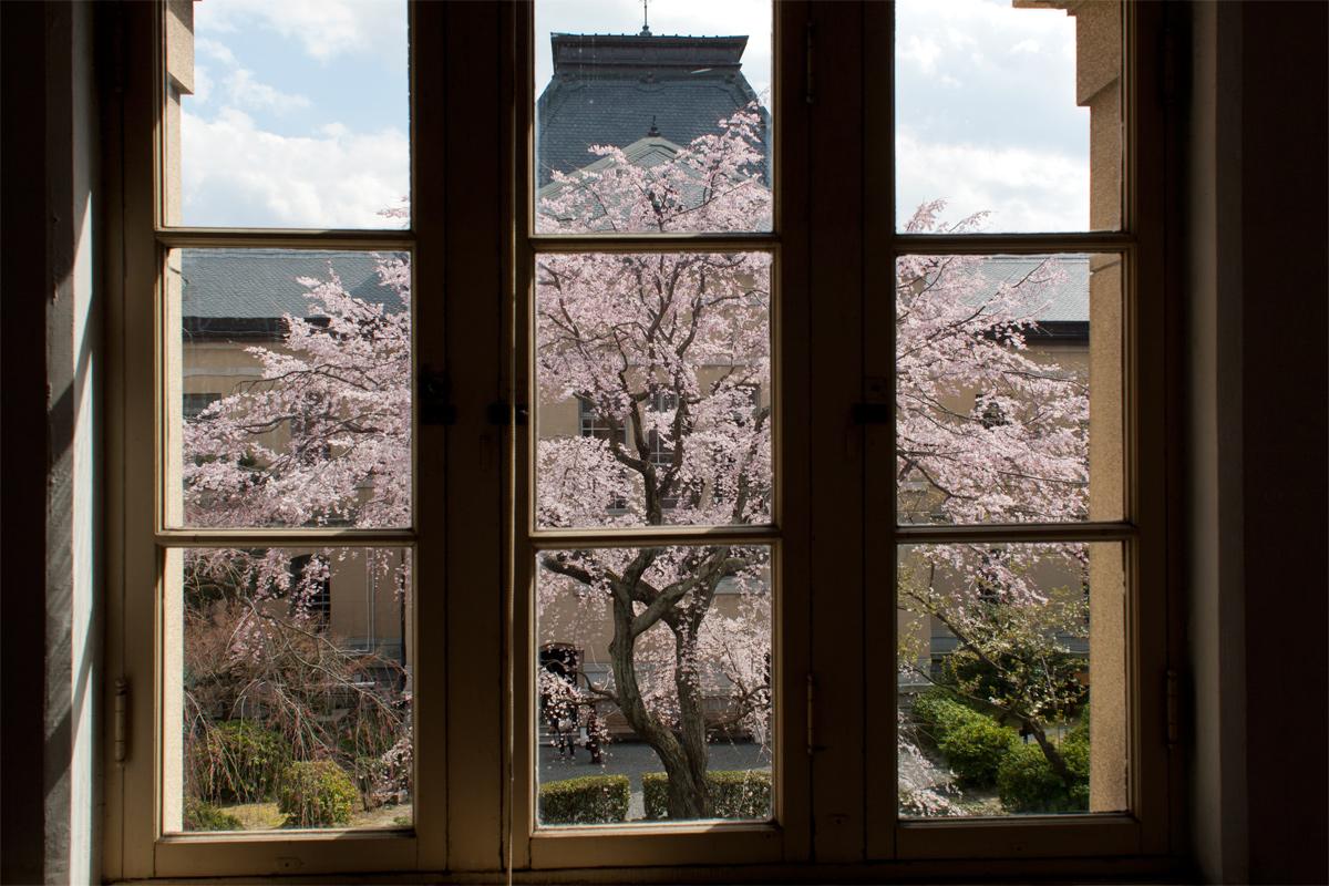桜 2012 京都 <京都府庁>_f0021869_012533.jpg