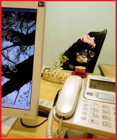 花のOL劇場。さくら編・春陽気全開。_e0236072_17305736.jpg