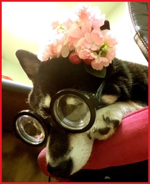 花のOL劇場。さくら編・春陽気全開。_e0236072_183315.jpg