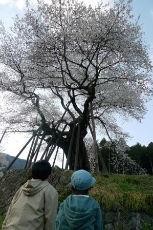 南部町、本郷の千年桜・2012_f0177373_1975945.jpg