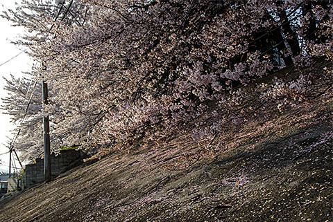 今日は暖かい春でした_c0002682_2311573.jpg