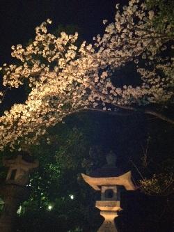 桜満開!_b0164894_1920684.jpg