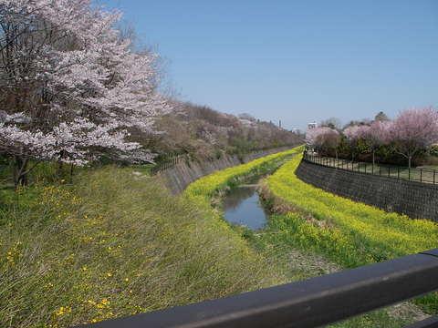 『記念公園通信』-ジュニアY子_b0172896_1540173.jpg