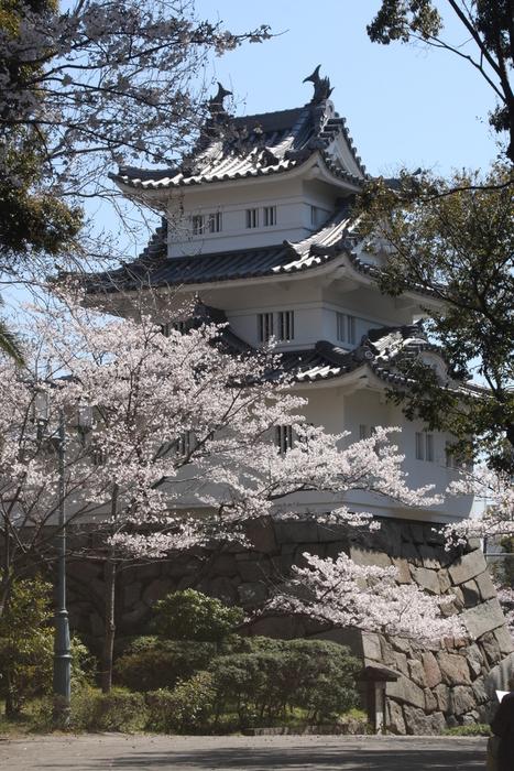 やっと桜が咲きました。_a0037298_2204983.jpg