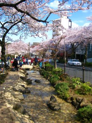 桜_a0036808_14261285.jpg