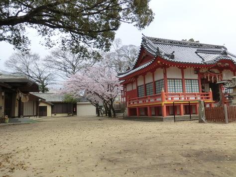 学校前神社の公園さくら満開_b0159908_1442914.jpg
