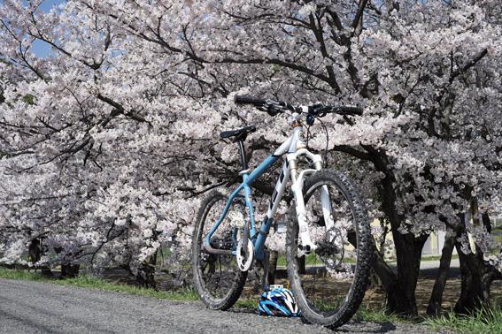 12.04.12(木) 桜咲く!_a0062810_15581546.jpg