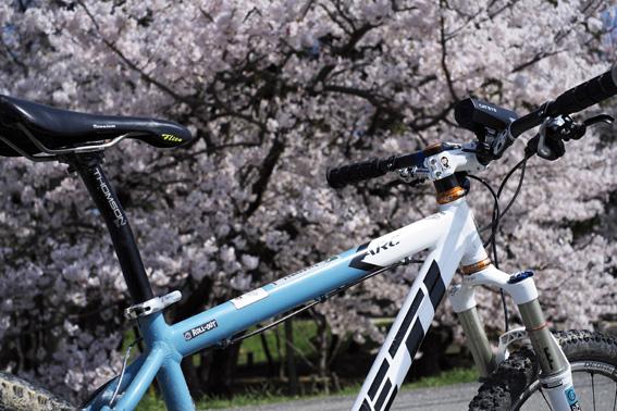 12.04.12(木) 桜咲く!_a0062810_155834100.jpg