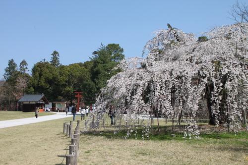 上賀茂神社 咲きそろい_e0048413_224322.jpg