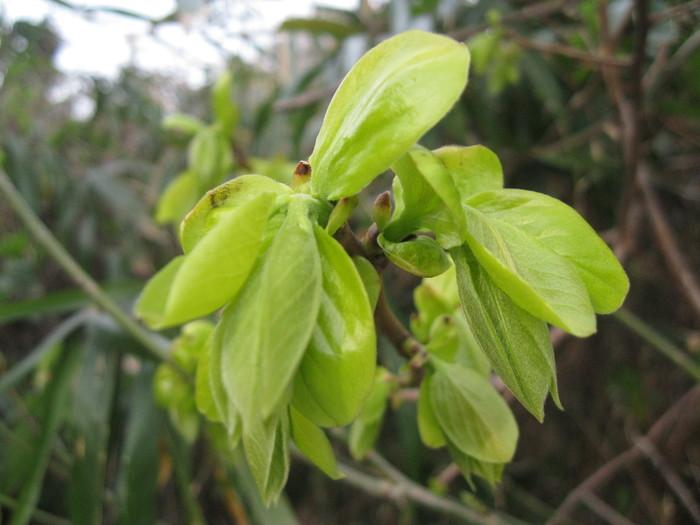 新芽の「輝き」の季節です☆_a0125419_844865.jpg