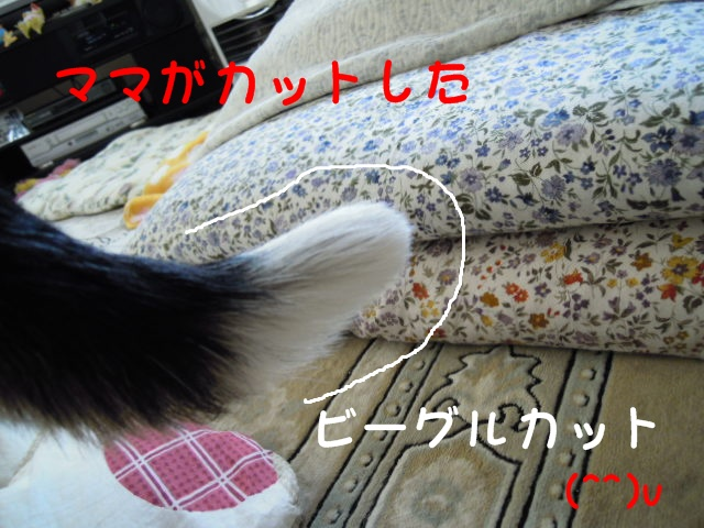 c0166622_923318.jpg