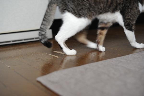 甲状腺機能亢進症【猫が嘔吐する原因】病気の原因がわからないとき。通常の血液検査では判明しません。_b0162726_11452962.jpg
