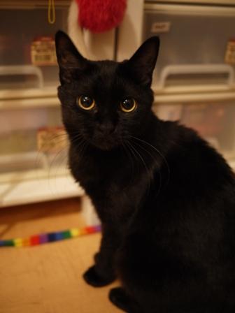 おもちゃ箱猫 ろった編。_a0143140_210227.jpg