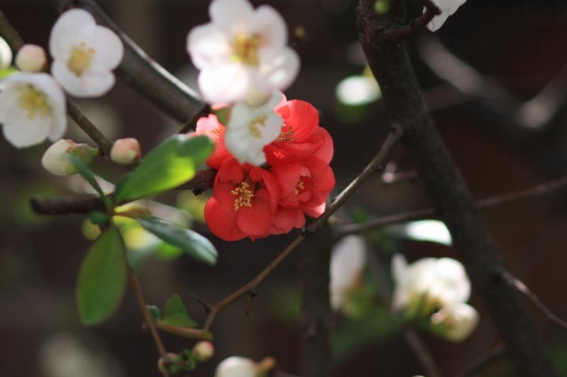 Flowers_b0190540_1464097.jpg