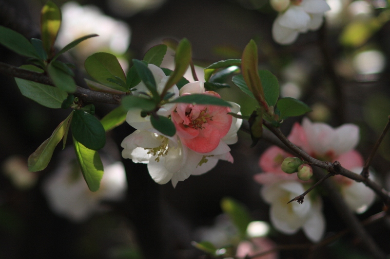 Flowers_b0190540_1465368.jpg