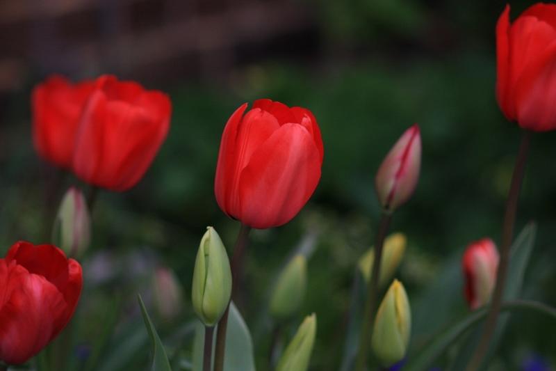 Flowers_b0190540_1473688.jpg