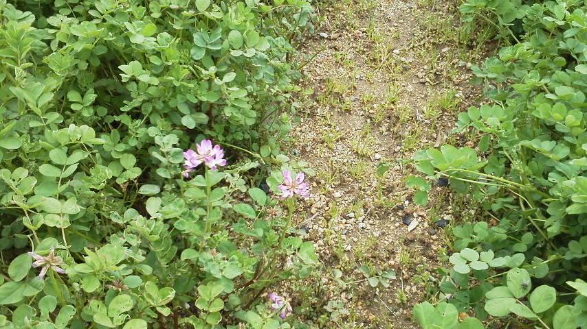 やっと咲きました。_f0079749_12433248.jpg