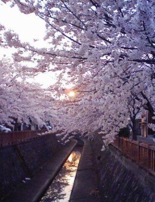 休憩の続き 春爛漫_f0197754_152966.jpg