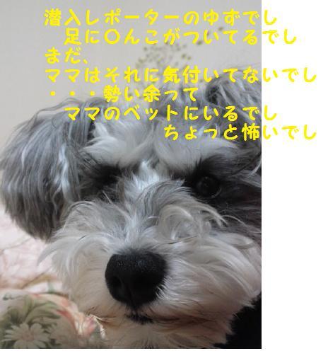 a0230864_2242192.jpg