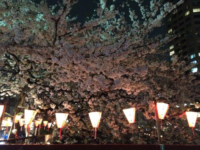 雨のお花見 ☆ 中目黒_c0151965_16225844.jpg