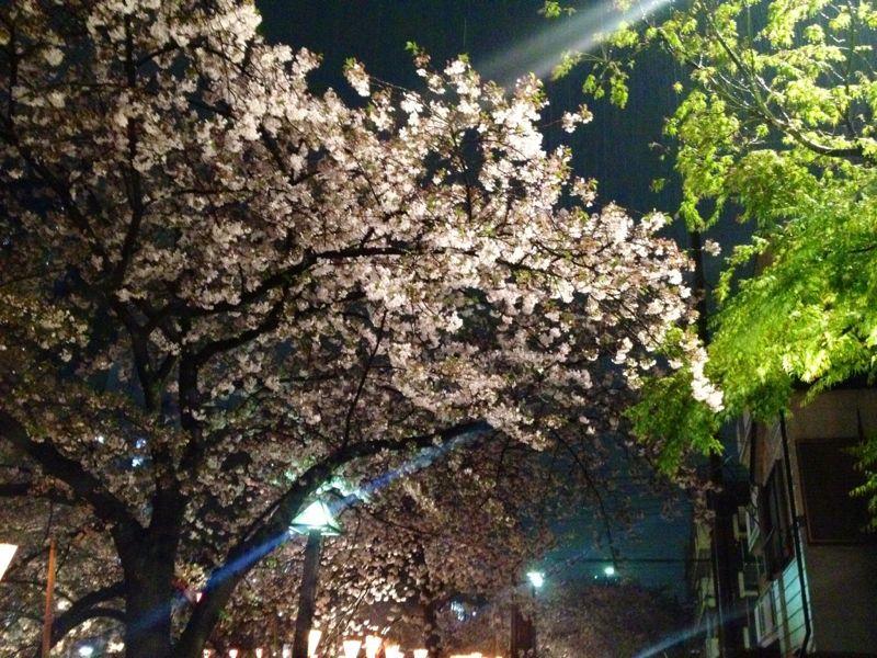 雨のお花見 ☆ 中目黒_c0151965_1623410.jpg