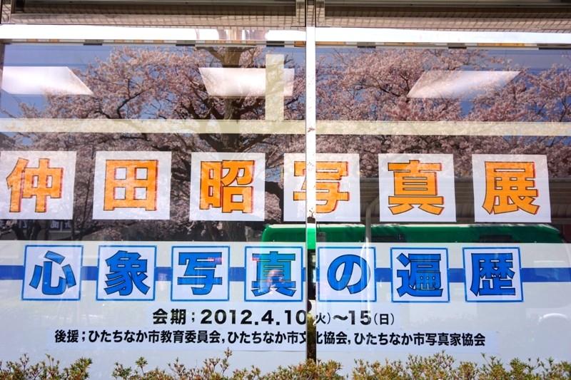 12年4月13日・日立市桜_c0129671_18432129.jpg