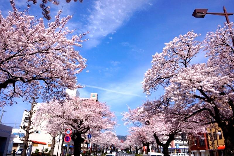 12年4月13日・日立市桜_c0129671_18433332.jpg