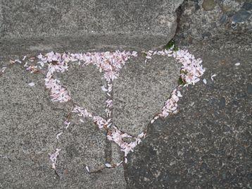 ハートの(ように見える)落花弁_e0170272_1974842.jpg