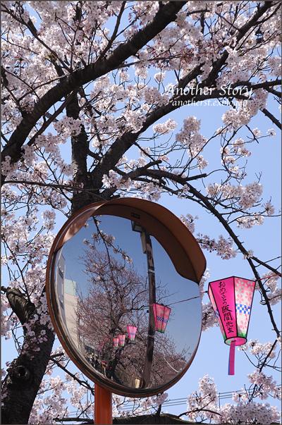 お花見_a0238574_254454.jpg