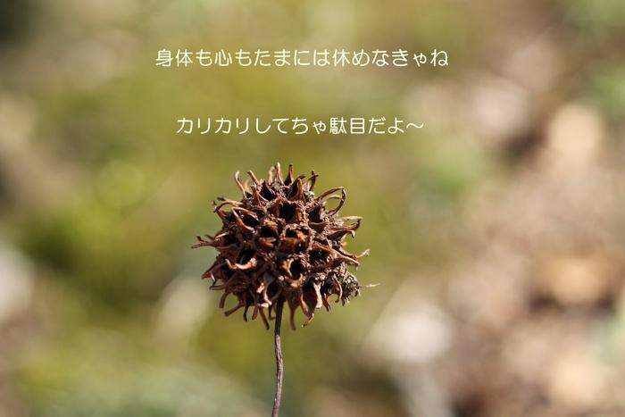 d0199578_771057.jpg