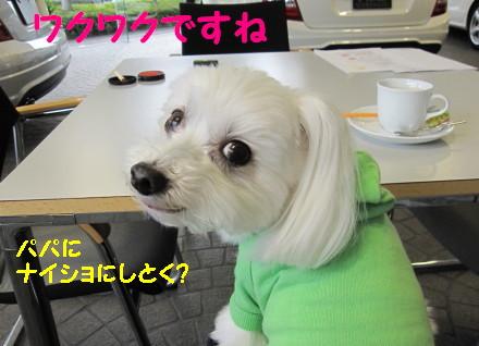 b0193480_1610271.jpg