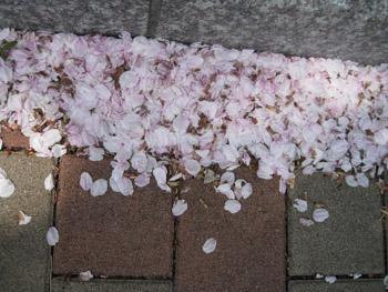 葉桜_f0061394_1735933.jpg