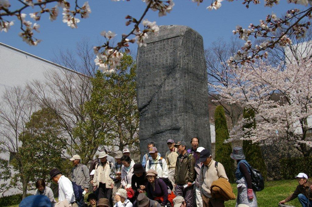 八尾市の桜_f0138096_12205640.jpg