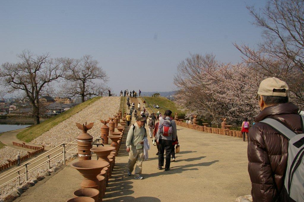 八尾市の桜_f0138096_1221995.jpg