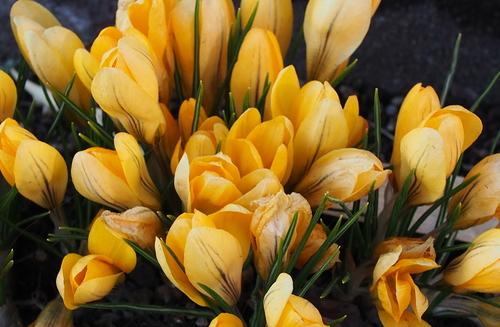 近所の庭の花とコゲラ_f0138096_2110761.jpg