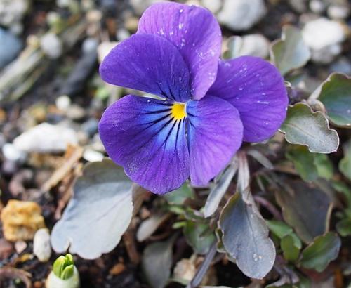 近所の庭の花とコゲラ_f0138096_2194878.jpg