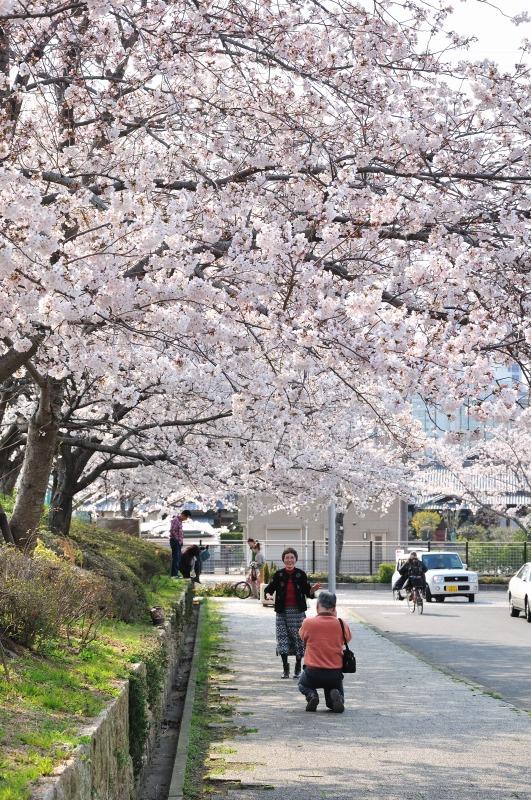 桜の木の下で vol.4_e0184300_035299.jpg