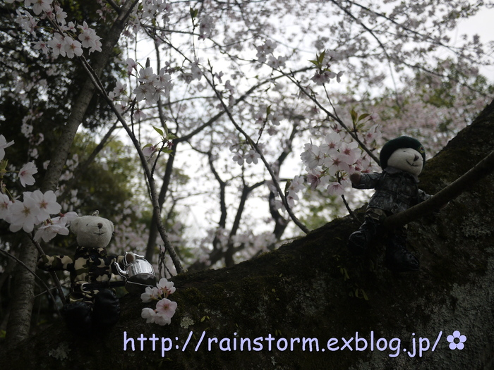 2011 RAIN CHARITY LIVE CONCERT IN JAPAN」DVD_c0047605_7315263.jpg