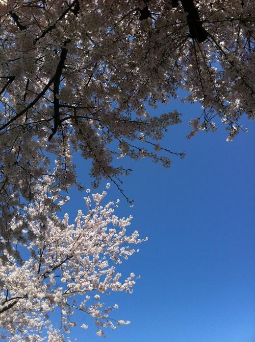 里山に遅い春がやってきて_d0020310_16234741.jpg
