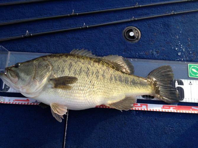 川北です。久しぶりに良い釣が出来ました。_a0153216_14351385.jpg