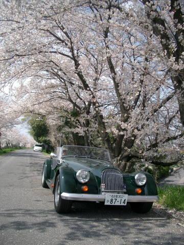桜満開_f0034816_242485.jpg