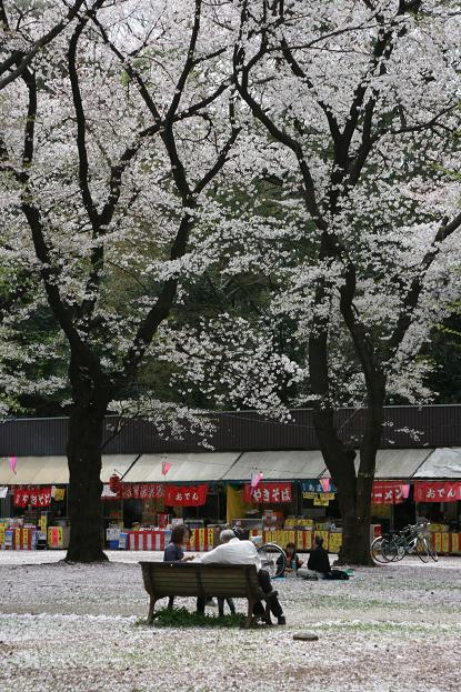 大宮公園 桜の終わり_d0150720_11132520.jpg